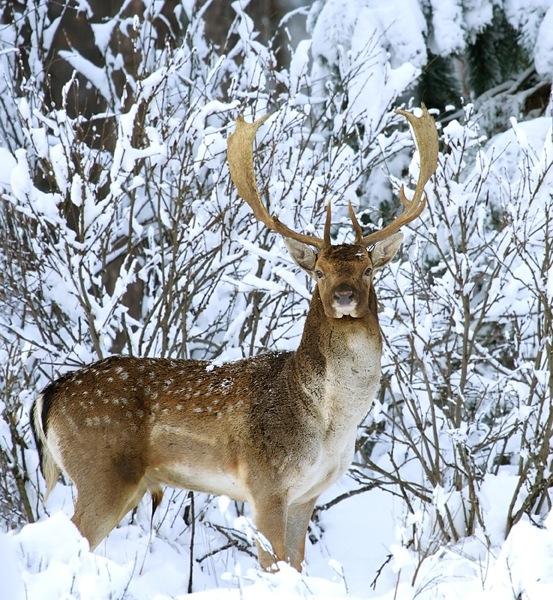 Куда сходить на охоту в Новосибирске? Охотничьи хозяйства Новосибирска.