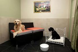 Гостиницы и приюты для животных в Новосибирске