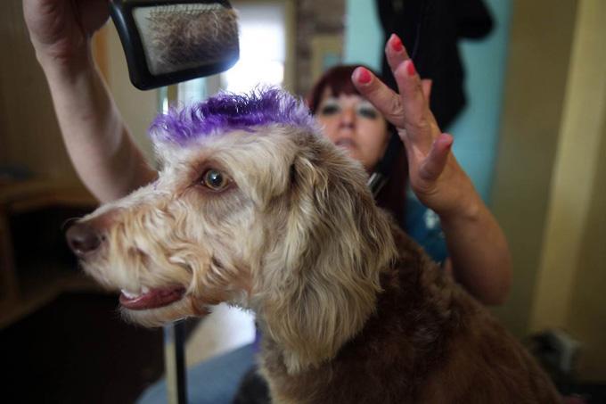Где в Омске есть паримахерские для животных? Зоосалоны Омска.