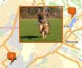 Где осуществляют дрессировку собак в Новосибирске?