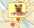 Где в Новосибирске есть паримахерские для собак и кошек?