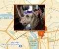Где в Омске есть паримахерские для собак и кошек?