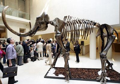 Где расположены зоологические музеи Новосибирска?