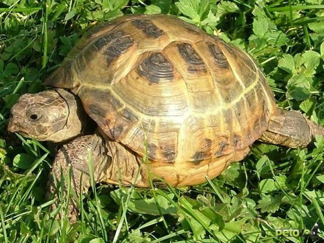В каком зоомагазине купить черепаху в Новосибирске?