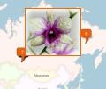 Где купить орхидеи в Новосибирске?