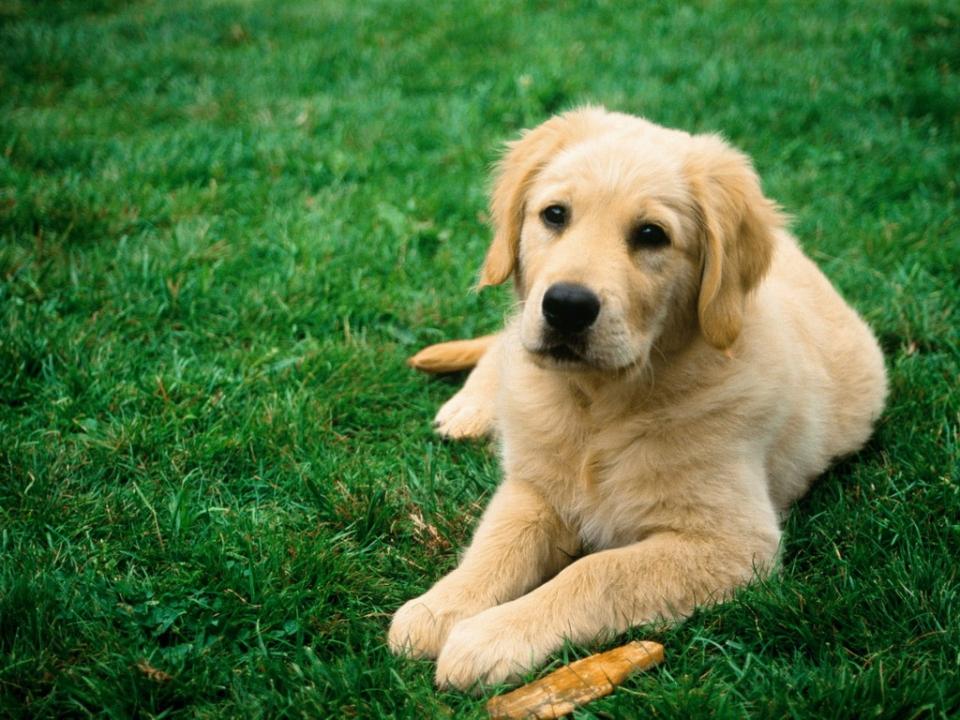Что делать, если нашли собаку в Новосибирске?