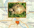 Где купить черепаху в Новосибирске?