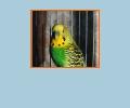 Где купить попугая и клетки в Новосибирске?