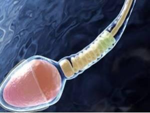 Где сделать спермограмму в Омске?