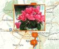 Где лучше всего купить комнатные цветы в Новосибирске?