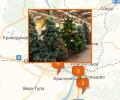 Где купить новогоднюю ёлку в Новосибирске?