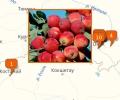 В каких питомниках купить сортовые деревья в Омске?